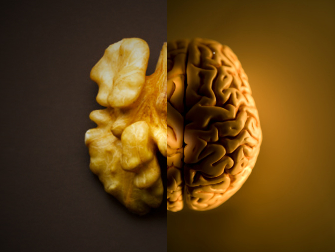 Model brain on brown background